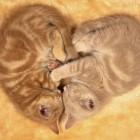 foto gattino 87