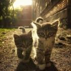 foto gattino 88