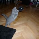 foto gattino 90