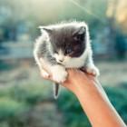 foto gattino 92