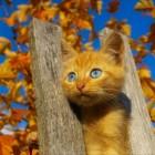 foto gattino 95