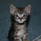 foto gattino 96