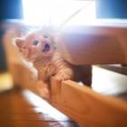 foto gattino 98
