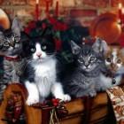 foto gattino 99