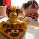 torta per cani 05 140x140