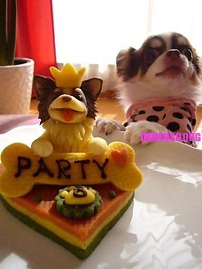 torta per cani 05