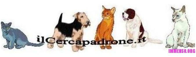 come adottare un cane o gatto abbandonato