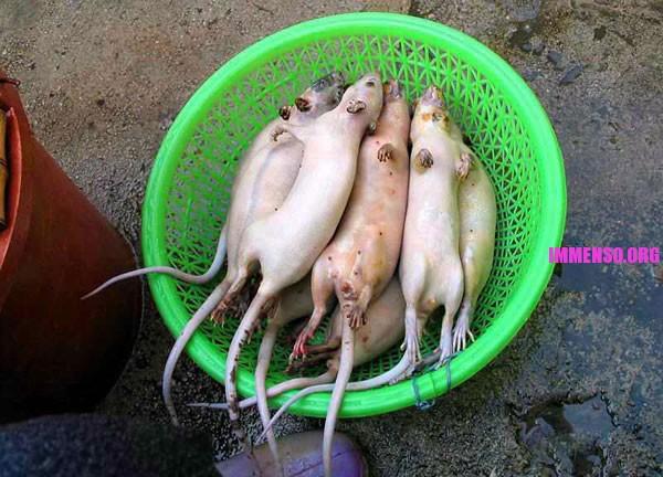 Come cucinare e mangiare topi - Come uccidere i topi in casa ...