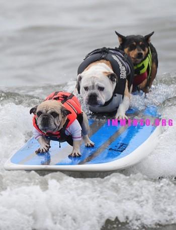 animali divertenti foto 01 350x455