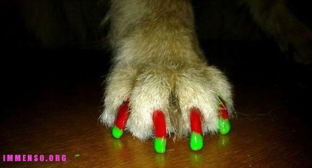 cane unghie colorate foto 07