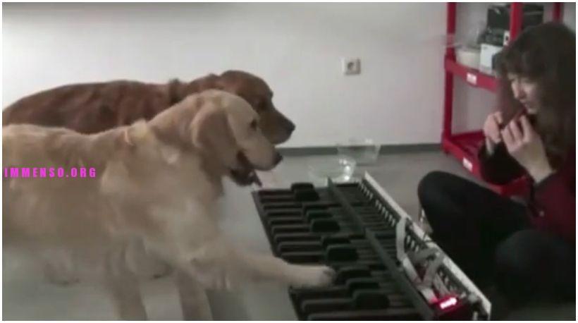 cani suonano pianoforte