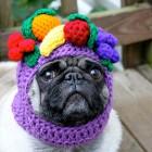 immagini divertenti cappelli cani 01