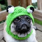 immagini divertenti cappelli cani 03