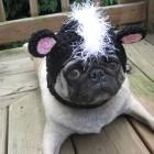 immagini divertenti cappelli cani 05