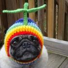 immagini divertenti cappelli cani 06