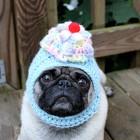 immagini divertenti cappelli cani 07 140x140