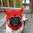 immagini divertenti cappelli cani 08