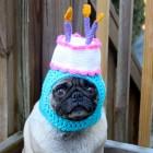 immagini divertenti cappelli cani 09