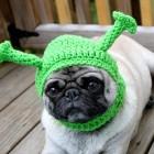 immagini divertenti cappelli cani 10 140x140