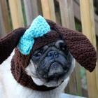 immagini divertenti cappelli cani 12
