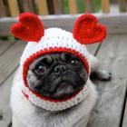 immagini divertenti cappelli cani 13
