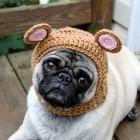 immagini divertenti cappelli cani 14 140x140