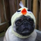 immagini divertenti cappelli cani 15 140x140