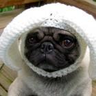 immagini divertenti cappelli cani 16 140x140