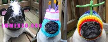 immagini divertenti cappelli cani 17 350x137