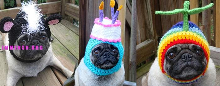 immagini divertenti cappelli cani 17