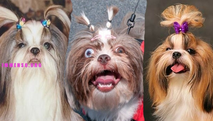 foto divertente cani