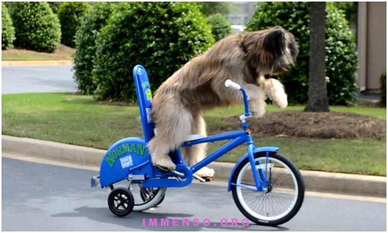 cane che va in bicicletta