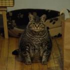 foto gatti grassi 02 140x140