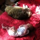 foto gatti grassi 22 140x140