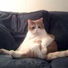 foto gatti grassi 25