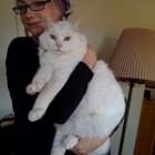 foto gatti grassi 34 140x140