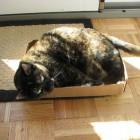 foto gatti grassi 40