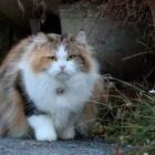 foto gatti grassi 46