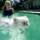 foto gatti nuotano in acqua 17