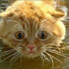 foto gatti nuotano in acqua 18