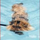 foto gatti nuotano in acqua 19