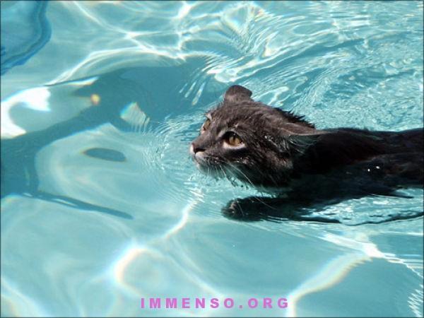 Foto foto gatti nuotano in acqua 22 gatti che si fanno il bagno e nuotano 29 foto - Bambolotti che fanno il bagno ...