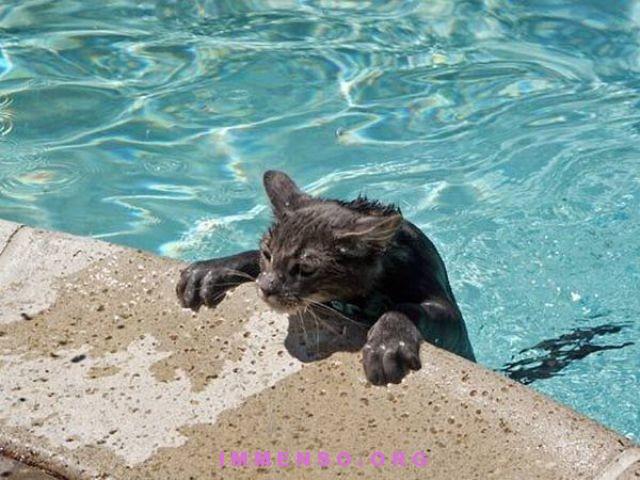 Gatti che si fanno il bagno e nuotano 29 foto - Donne che fanno il bagno ...