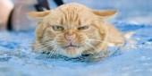 foto gatti nuotano in acqua 27