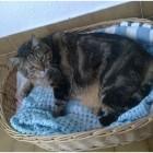 gatto grasso tina di biase