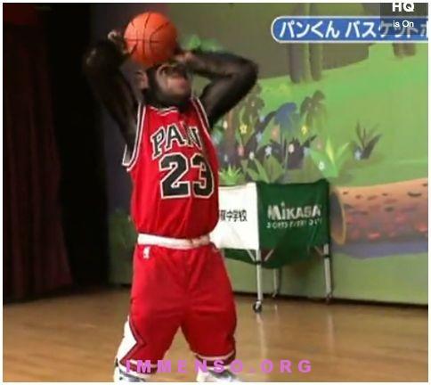 scimpanze gioca a pallacanestro video