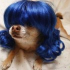 parrucca cani gatti foto 03