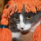 parrucca cani gatti foto 07