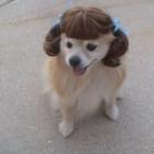 parrucca cani gatti foto 09
