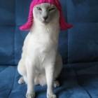 parrucca cani gatti foto 10